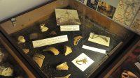 22. 2. 2014 - Vykopávky z území v hradu v muzeu v Chrastavě