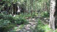 Lesní cesta u Volských kamenů