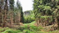 Pískovce v lesích kolem cyklostezky