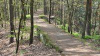 Cesta lesem kolem ZOO