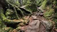 Ve skalách nad údolím Křinice