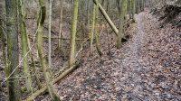 Cesta vysoko nad korytem potoka