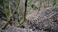 Pohled do koryta Kamenného potoka z cesty