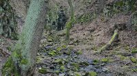 Cesta k vodopádu roklí