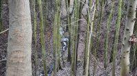 Pekelský potok