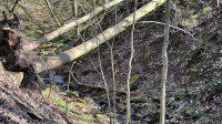 Stromy popadané přes rokli
