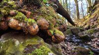Kořeny na kameni nad vodopádem