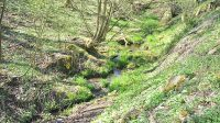 Koryto potoka ve Velké Veleni