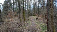 Lesní cesta k Velké Čertově zdi
