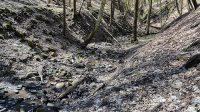 26. 4. 2021 - koryto potoka pod ruinou mlýna